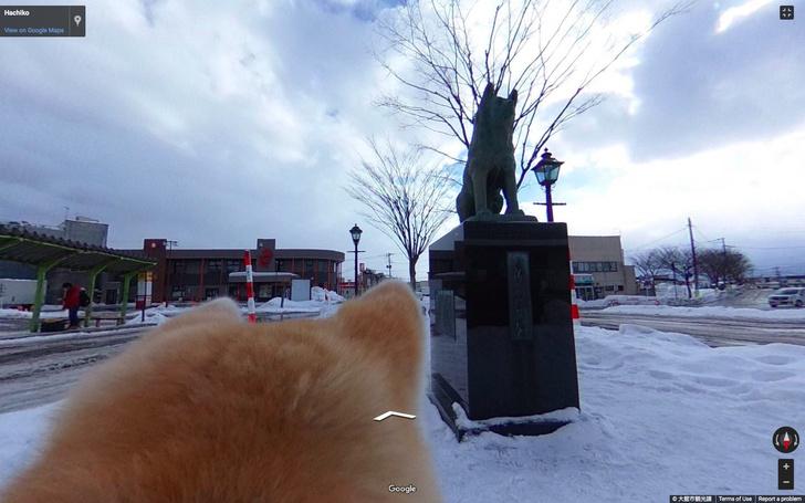 Фото №1 - Японский Google выпустил панорамы города, но от лица собаки (ВИДЕО)