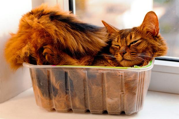 Фото №1 - Почему кошки постоянно залезают в коробки?