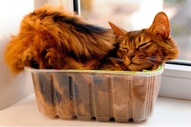 Почему кошки постоянно залезают в коробки? У науки есть ответ!