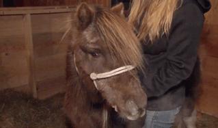 Мир не без добрых людей: жители Мэна собрали $4000 на новый пенис для пони