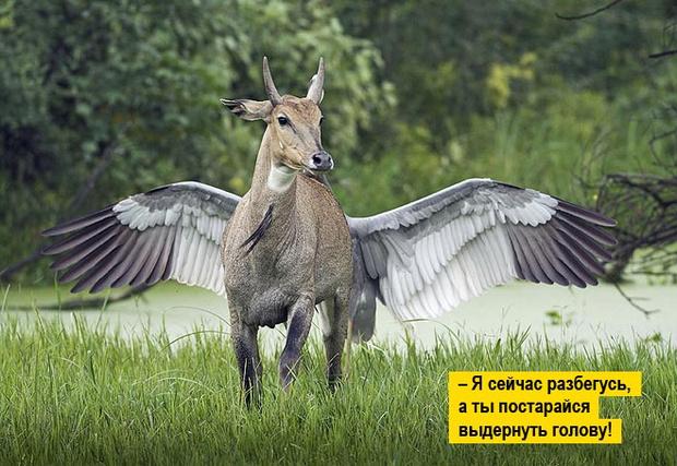 Фото №5 - 13 фото животных, которые тебя рассмешат