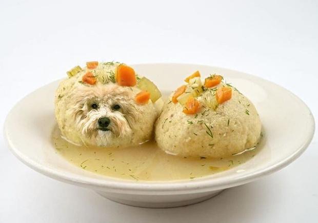 Фото №1 - Собаки в еде — лучший «Инстаграм» сезона!