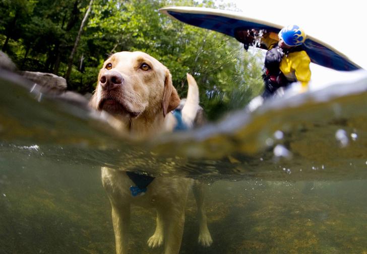 Фото №1 - Псыхология: краткая история дружбы собак и людей