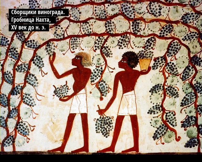 Cборщики винограда. Гробница Нахта, XVвек до н.э.