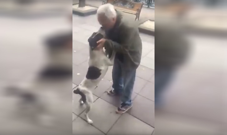 Фото №1 - Мужчина нашел свою собаку на улице спустя три года после пропажи (видео)