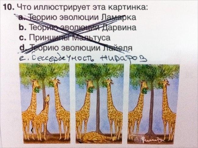 Бессердечность жирафов