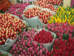 Женщины любят... цветами!
