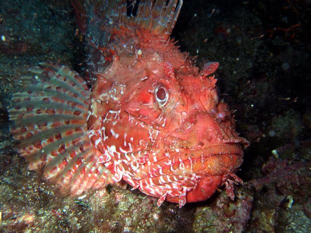Фото №3 - Как не бояться уколов морского ежа, кактуса и прочих колючих напастей