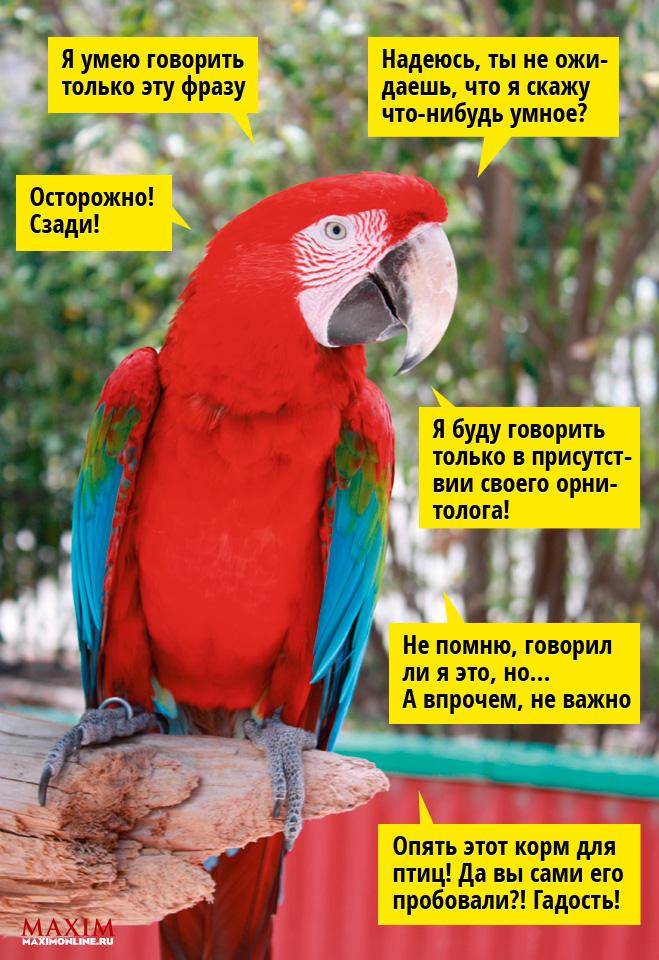 Фото №1 - 12 фраз, которым  обязательно нужно  обучить своего  попугая