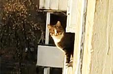 Кошачий паркур