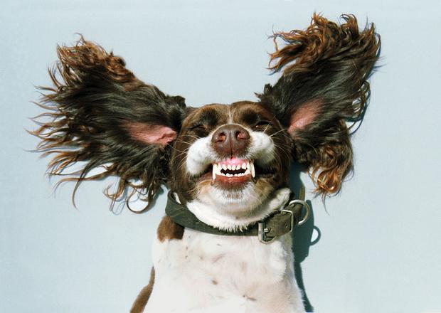 Фото №6 - Псыхология: краткая история дружбы собак и людей
