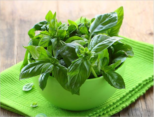 Фото №2 - Как вырастить съедобную зелень на подоконнике: кинза, лук, базилик и не только