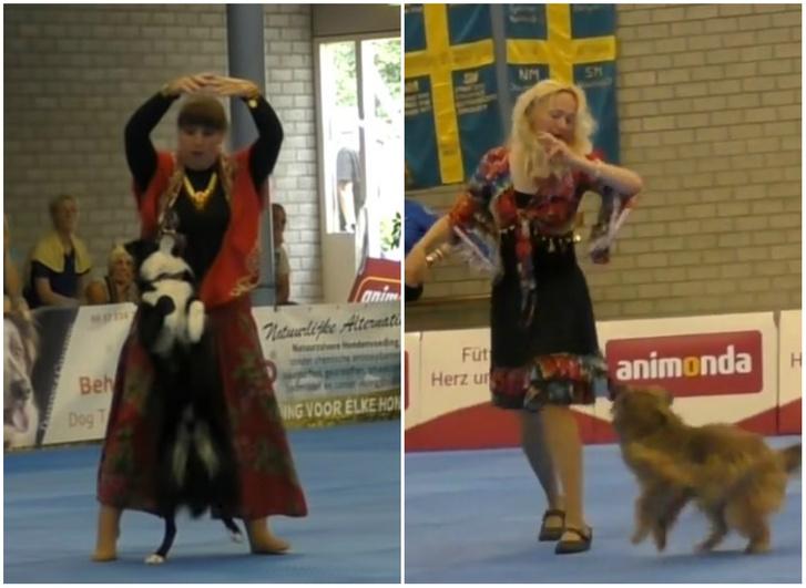 Фото №1 - Полюбуйся на финалистов чемпионата мира по танцам с собаками! ВИДЕО