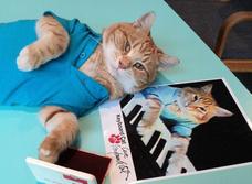 Умер кот Бенто — главный герой одного из первых роликов-мемов