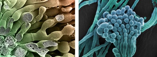 Фото №4 - Фунги сапиенс: почему грибы куда умнее и хитрее, чем мы думали