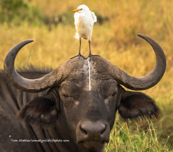 Фото №11 - Победители премии «Смешные фотографии дикой природы» 2016 года!