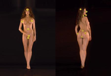 Femina vulgaris. Лучший анатомический атлас женщины