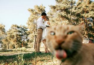 30 безнадежно запоротых свадебных фото