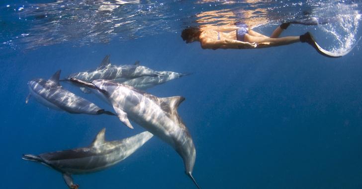 Фото №1 - Самого подлого в мире дельфина удалось заснять на ВИДЕО!