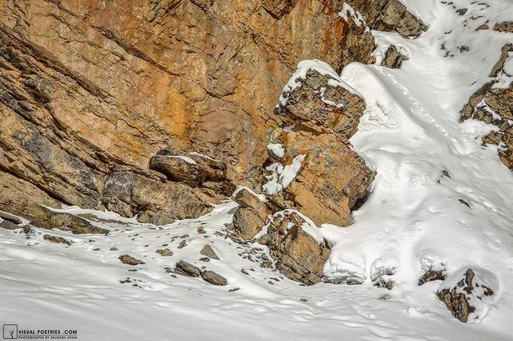 Фото №2 - Найди снежного барса на фото: новая оптическая иллюзия