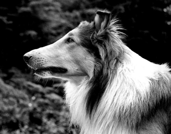 Фото №7 - 7 животных, которые достигли в жизни большего, чем ты