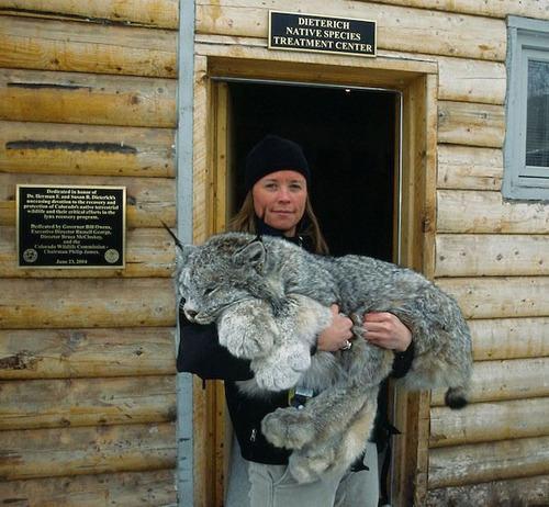 Фото №6 - 14 смертоносных животных, которые ведут себя, как будто они очаровательные котята