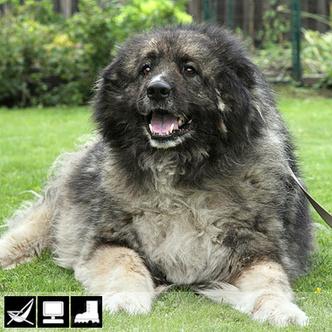 Фото №5 - Как выбрать домашнее животное в зависимости от типа твоего характера и размеров жилплощади