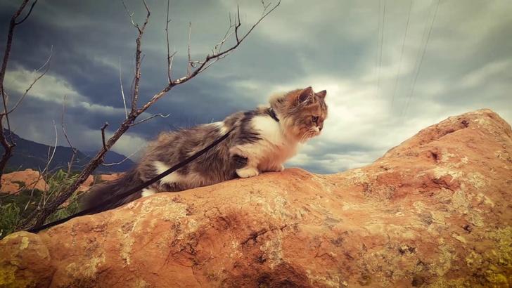 Фото №1 - Новая страсть Интернета: турпоходы котов (видео)
