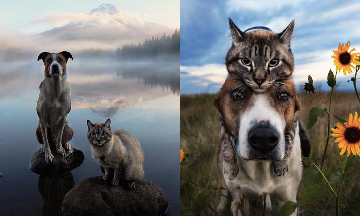 Фото №1 - Генри и Балу: «Инстаграм» о путешествиях кота и пса