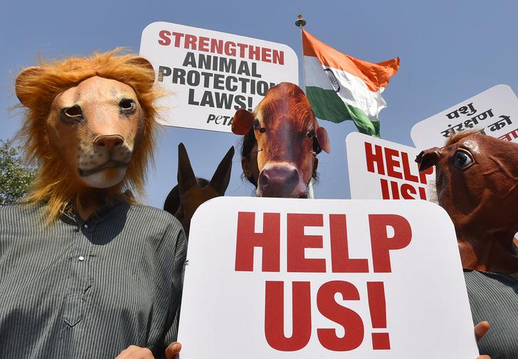 Фото №1 - Зоозащитники из PETA призвали отказаться от «жестоких» поговорок про животных