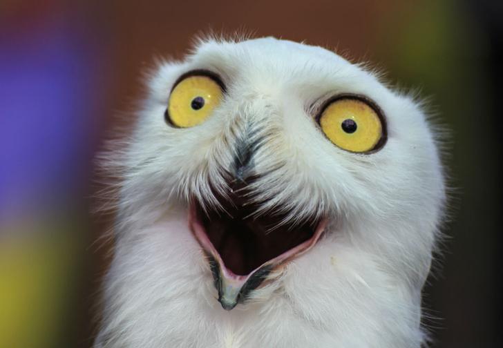 Фото №1 - Долгий взгляд глаза в глаза может вызывать галлюцинации!