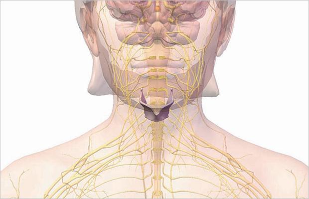 Cartilage thyroidea