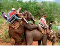 Фото №9 - Слонопотамия. 13 фотоисторий из жизни слонов