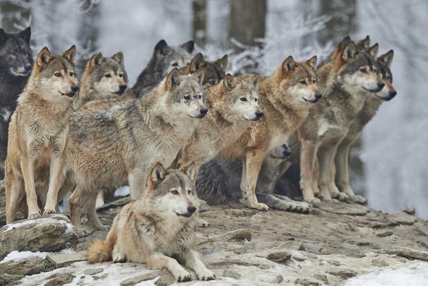 Фото №3 - Как в ходе эволюции собаки научились делать жалостливую морду