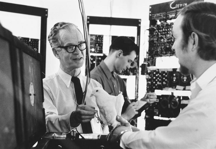 Фото №5 - Приключения профессора Скиннера и доктора Уотсона: правдивая история основателей бихевиоризма