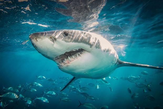 Не делай резких движений и выброси фонарик: чего точно не надо делать, чтобы тебя не съела акула