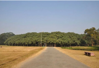 На вопрос, может ли лес состоять из одного дерева, отвечает Великий баньян