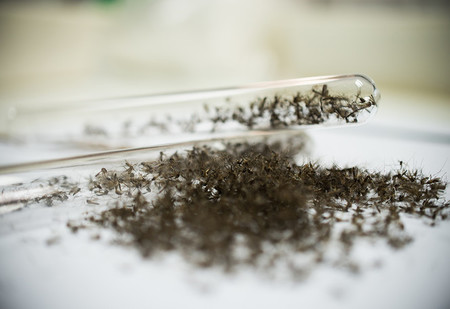 240 комаров сжимают в 1 кубический сантиметр (видео и объяснение, кому и зачем это надо)