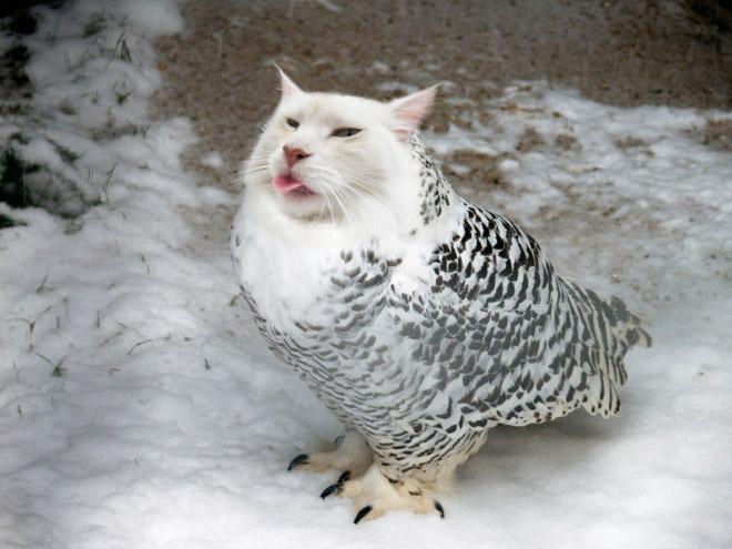 Котосовы — лучшее, что не создала природа!