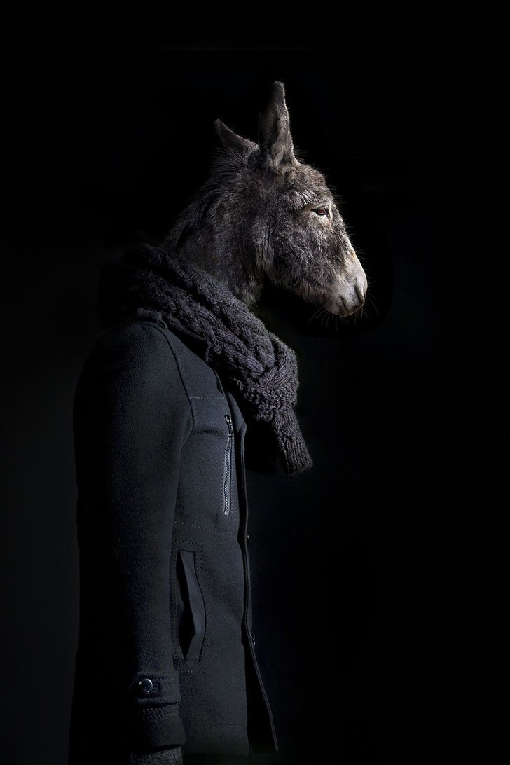Фото №7 - Так вот как выглядит конь в пальто!