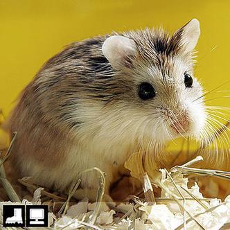 Фото №11 - Как выбрать домашнее животное в зависимости от типа твоего характера и размеров жилплощади