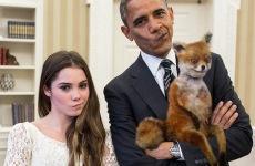 Мемы недели: Тесла, Обама, лиса