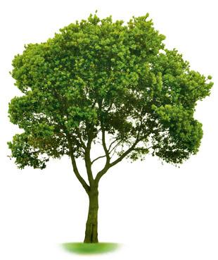 Когда ты вдруг вспоминаешь, каким маленьким было это дерево в твоем детстве.
