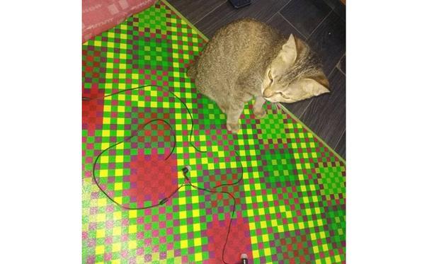 Фото №4 - Кот сгрыз наушники и принес за них хозяину необычный и пугающий подарок