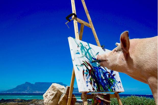 Фото №1 - Познакомься со свиньей-художником, чьи картины продаются по 2 тысячи долларов за штуку!