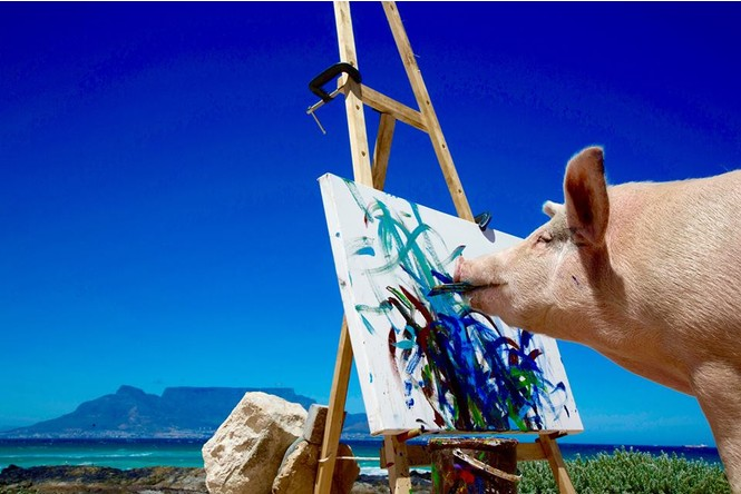 Познакомься со свиньей-художником, чьи картины продаются по 2 тысячи долларов за штуку!