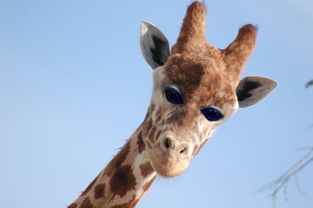Фото №8 - Вот как выглядели бы животные, если бы глаза у них были спереди!