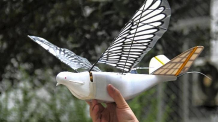 Фото №1 - Китайцы изобрели дрон, который выглядит и летает как птица (ВИДЕО)