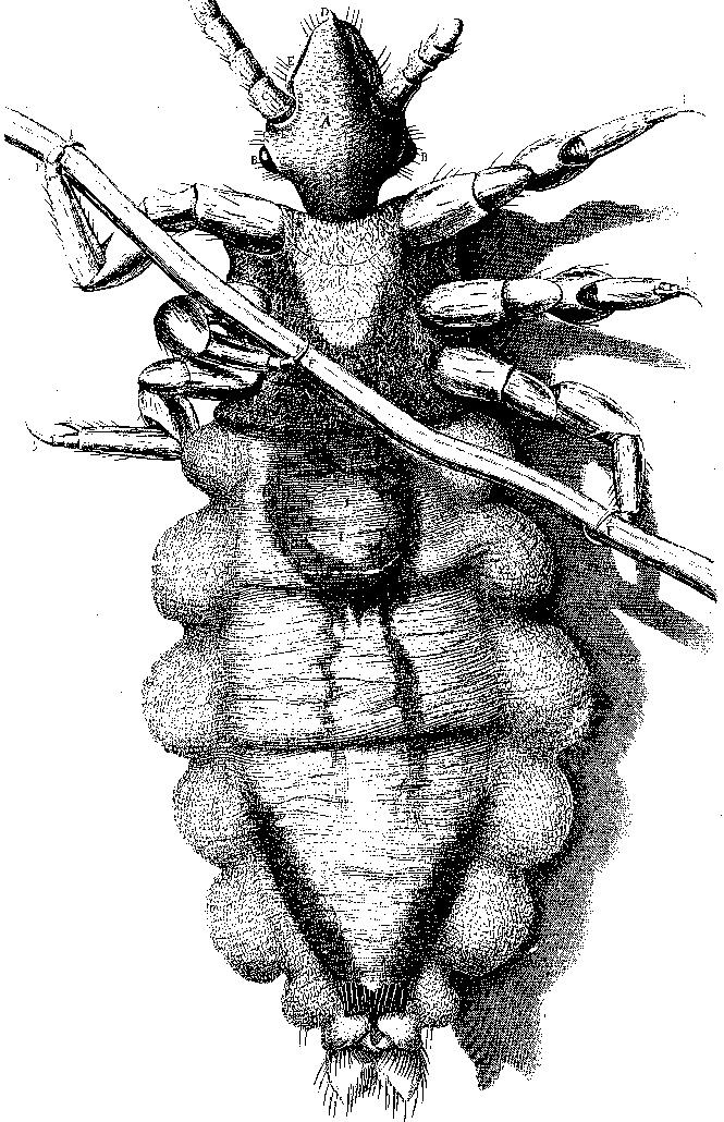Фото №10 - Слабоумие и отвары: чем лечились от всяких холер наши предки до изобретения анальгина иалка-зельтцера