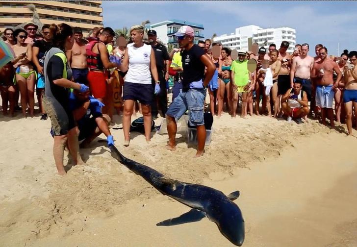 Фото №6 - Акула устроила панику на испанском пляже